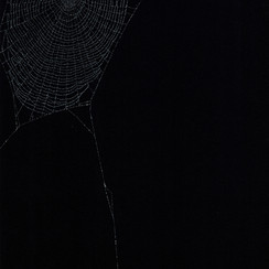 Entanglement 24  monoprint on black paper made directly from a spiders web, 29.7x42cm