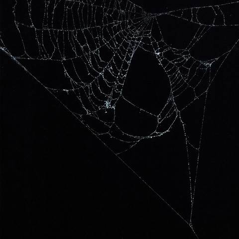 Entanglement 27  monoprint on black paper made directly from a spiders web, 29.7x42cm