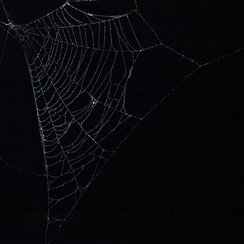 Entanglement 10   monoprint on black paper made directly from a spiders web, 42x29.7cm