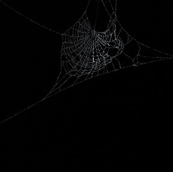 Entanglement 11  monoprint on black paper made directly from a spiders web, 42x29.7cm