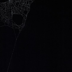 Entanglement 1 monoprint on black paper made directly from a spiders web, 29.7x42cm