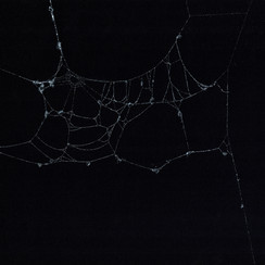 Entanglement 22  monoprint on black paper made directly from a spiders web, 42x29.7cm