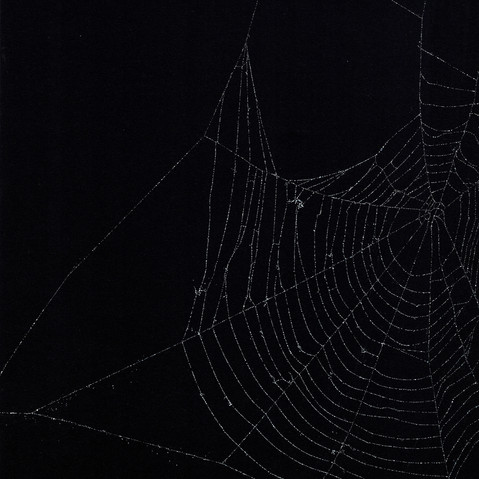 Entanglement 40  monoprint on black paper made directly from a spiders web, 29.7x42cm