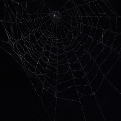 Entanglement 36  monoprint on black paper made directly from a spiders web, 42x29.7cm