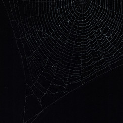 Entanglement 25  monoprint on black paper made directly from a spiders web, 29.7x42cm