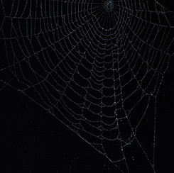 Entanglement 15  monoprint on black paper made directly from a spiders web, 29.7x42cm