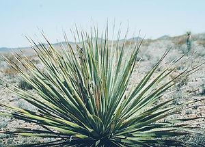 FUKUMEN覆面|asakuFUKUMEN覆面|asakusa台東区浅草|tequilaテキーラ|tacosタコス|mexicanメキシコ料理メキシカン|spirits