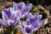 Frühling03.jpg