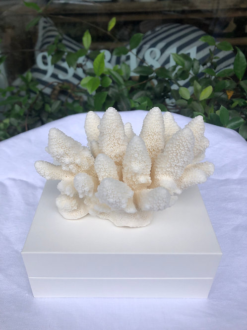 Acropora Finger Coral