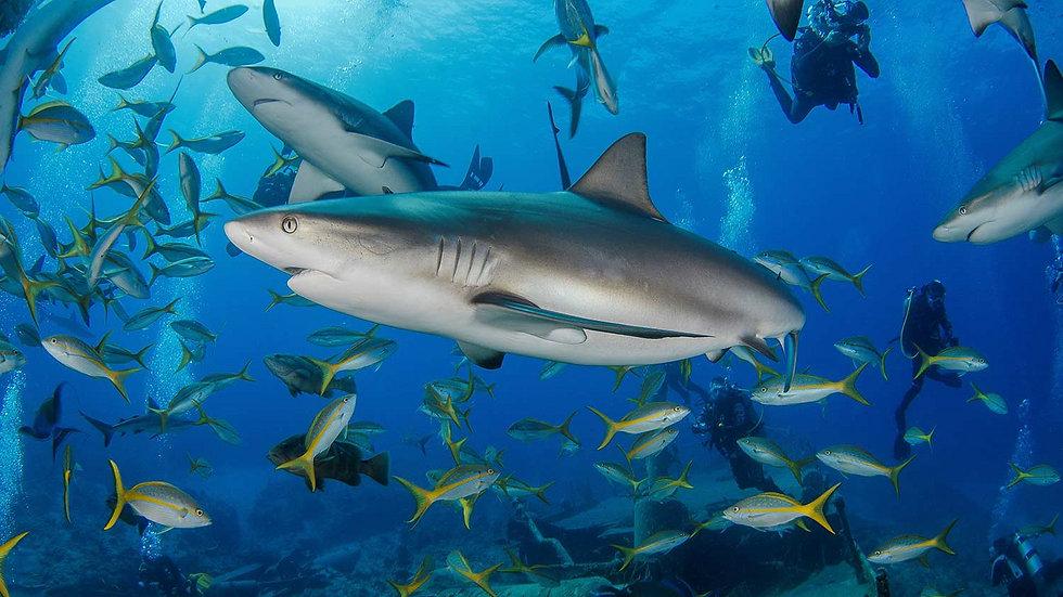arribada-sharks-on-austin_edited.jpg