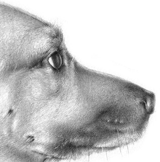 Example of pencil illustration