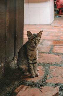 Cat in Kandal Market, Phnom Penh - Cambodia