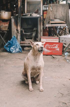 Not so friendly dog at Kandal Market, Phnom Penh - Cambodia