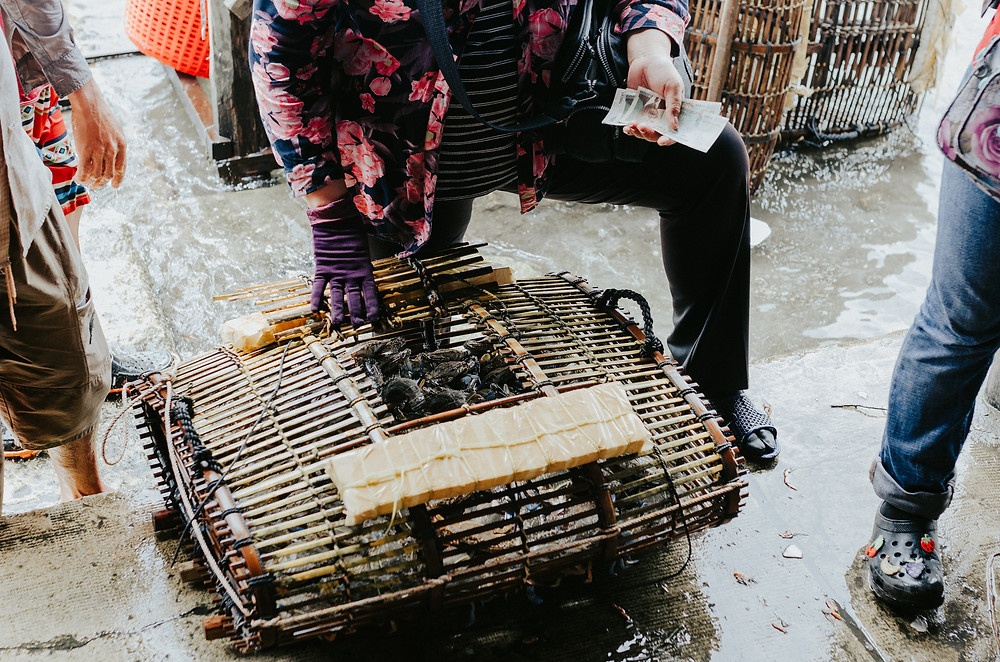 Fresh crabs captured - Crab Market, Kep - Cambodia