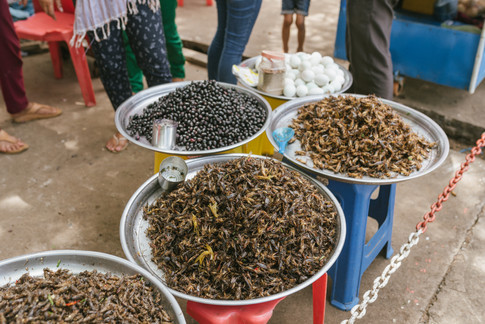 Selling insects in Downtown Kampong Chhnang, Cambodia