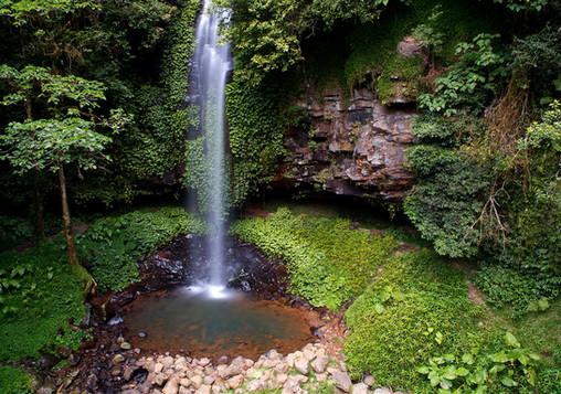 Rainforest_flowing_water_WikimediaCommons.jpg