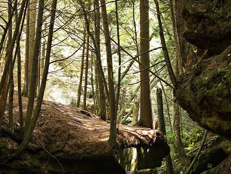 Hike Houghton Falls!