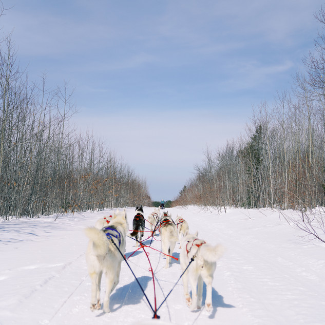 Dogs with a sled
