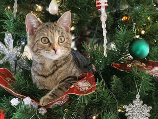 Cats and Christmas Trees..!!