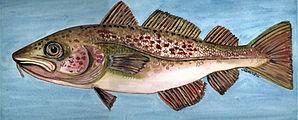 capecodfish.jpg