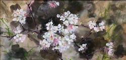 Beach Plum Blossoms, 10x20, Acrylic, fra
