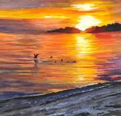 Seabirds Love the Ocean-NS