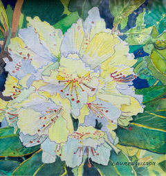 Yellow Rhododendron_Wilson