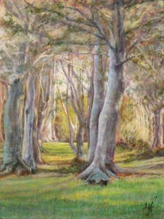 Amongst the Beeches