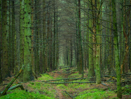 Back to the Forest:  The Health Benefits of Shinrin-yoku