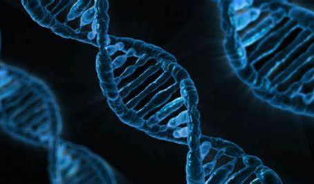 A brief discussion of our daily (genetic) expression of self