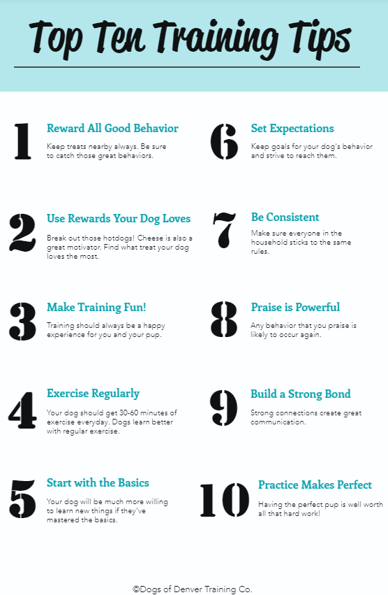 Top Ten Dog Training Tips from Dogs of Denver - Dog Training Co.