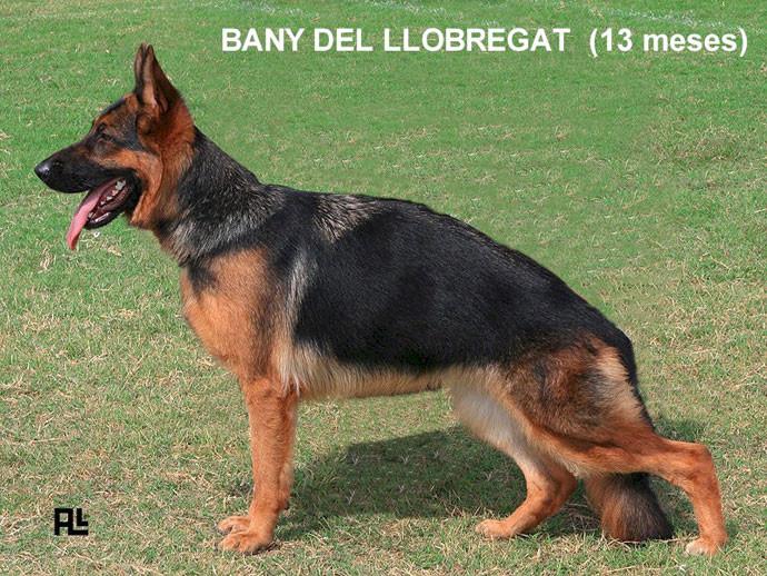 Bany-del-Llobregat.jpg