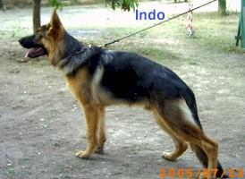 Indo2.jfif