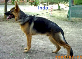 Indo1.jfif