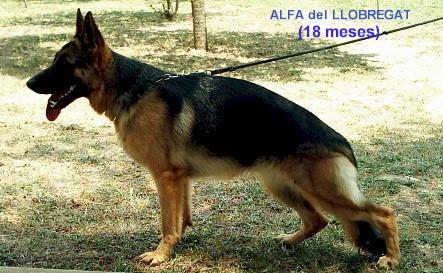 Alfa.jfif