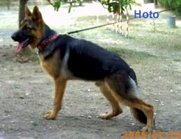 Hoto1.jfif