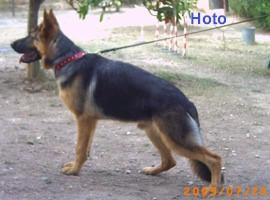 Hoto2.jfif
