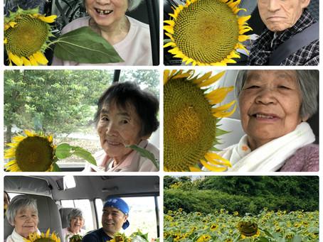 所沢三ケ島のひまわり畑に行ってきました。