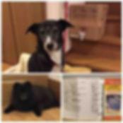 fc2blog_20151205205552866.jpg