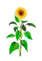 Brooklyn Sunflower