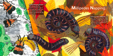 Millipedes Napping