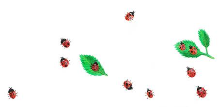 Lardybugs on White