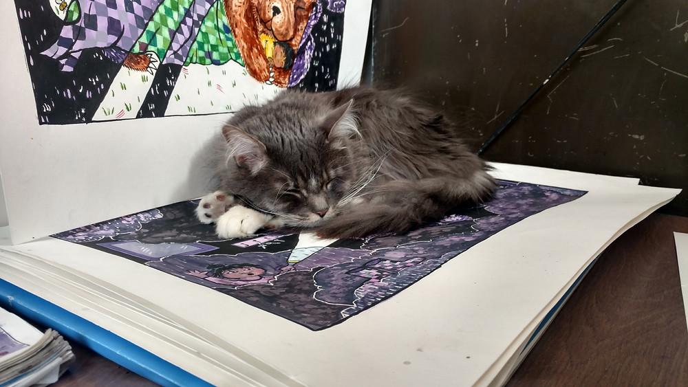 Halsey cat helping in studio