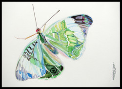 """""""Butterfly"""" A4"""