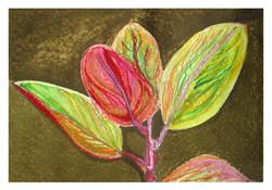 """""""  rubber plant leaves"""" app. 35x45cm"""