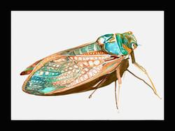 """Insect"" 37cmX27cm"