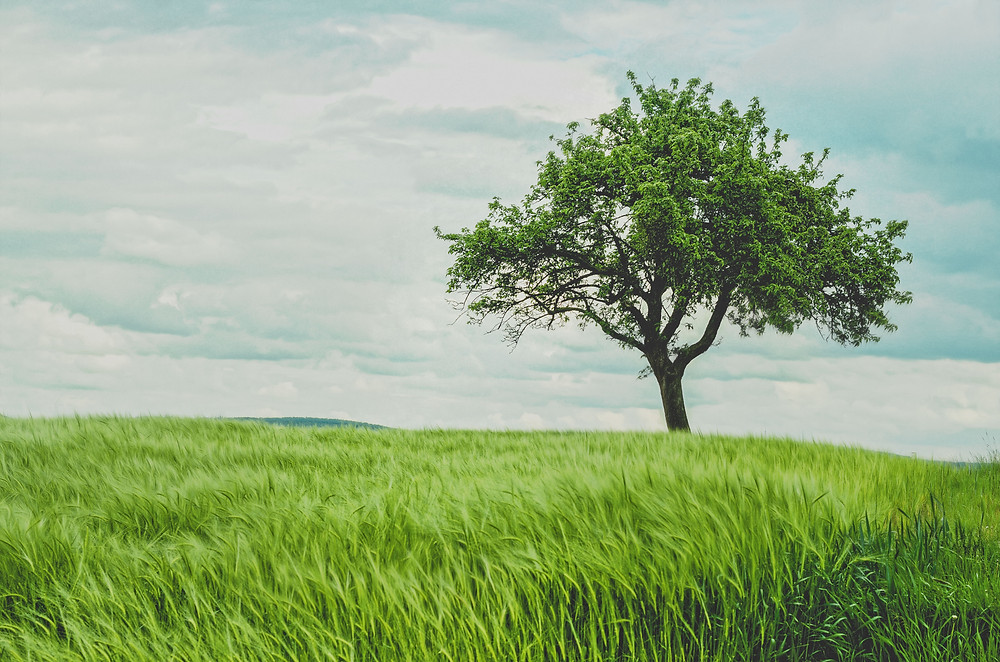 Image showing a tree and natural environment used in a blog post about carbon offsetting by EP Cowens