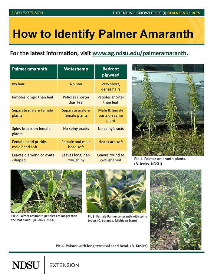 PalmerAmaranthBigIronHandout_Page_1.jpg