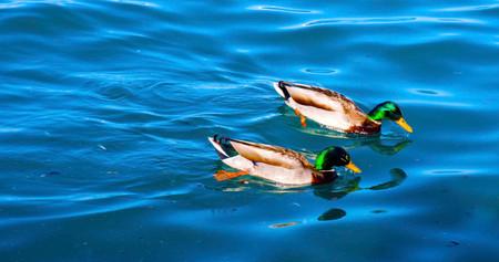birds1_s.jpg