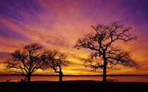 dawn1_s.jpg
